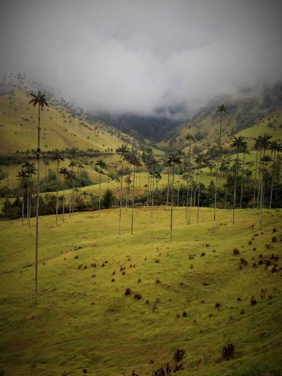 Salento Colombia viajeras viajar a dedo