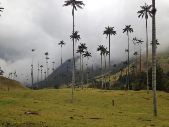 Valle del Cocora, Eje cafetero, Colombia