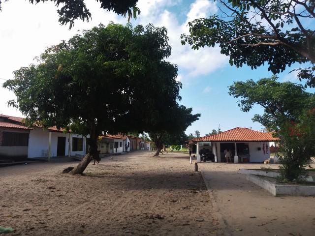 Mandacaru,en el Parque Nacional de los Lençois Maranhenses