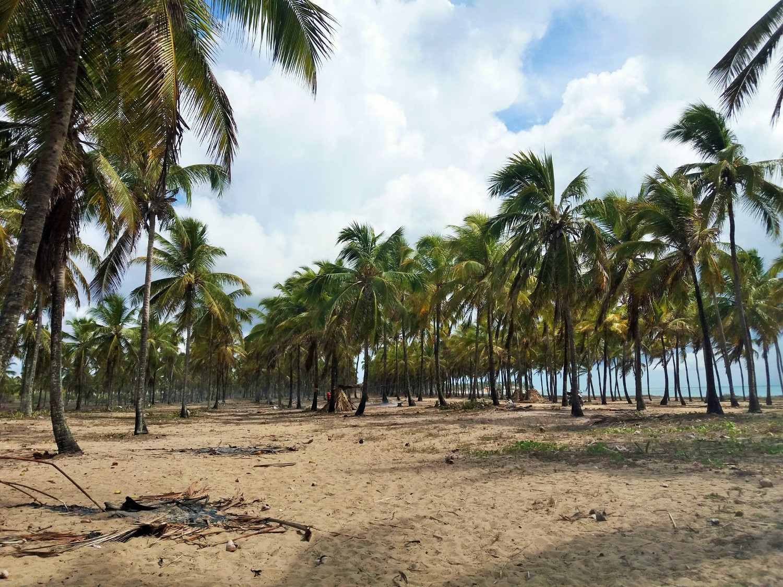 Mejores playas de Brasil, viajar a Maracaipe