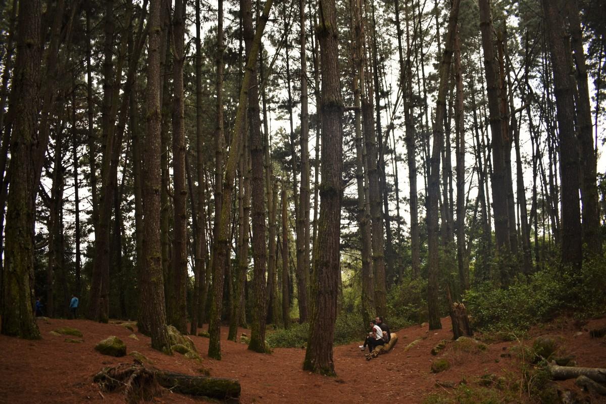 Que hacer en Merida-bosque de pinos