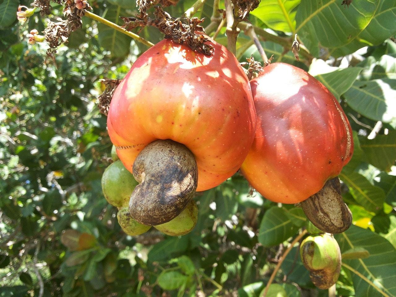 selva amazonica - frutas tipicas